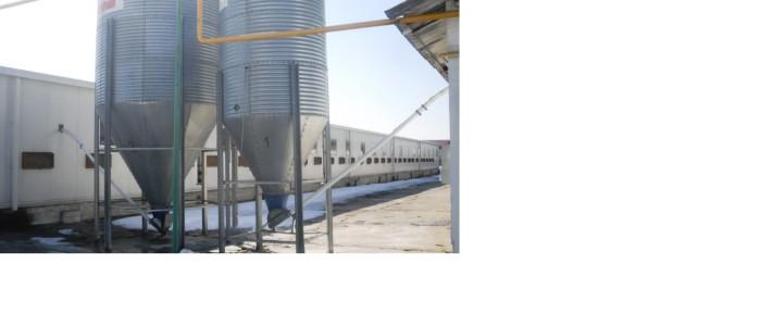 Vindem ferma de pui cu unitate de procesare a carnii